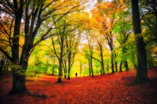 stromy, podzimní barvy, příroda, park