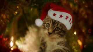 kitten, holiday