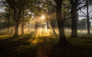 trees, rays of light, grass, nature