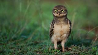 bird, Owl