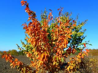 gold, autumn, November