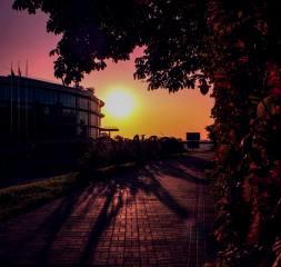 dawn, the city, summer