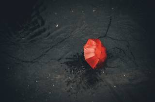 umbrella, Red, asphalt, the rain