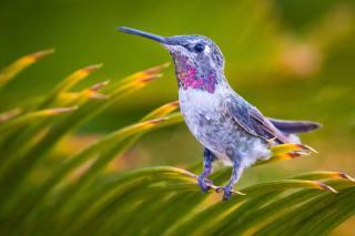 birds of the world, bird, hummingbirds, tropics, leaves