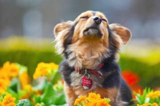 Animal, dog, dog, muzzle, fun, collar, badge, nature, flowers