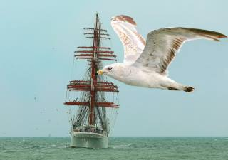 sailboat, sea, seagulls, Baltika
