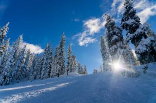 winter, snow, spruce, rays of light, nature
