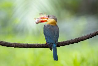 Kingfisher, branch, the beak, hunting, bird