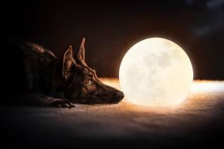 пес, перед светящимся шаром