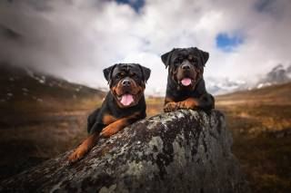 dogs, nature, mountains