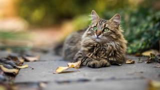 кошка, взгляд, животные