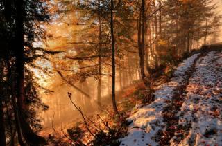 autumn, forest, snow, fog, the rays of the sun