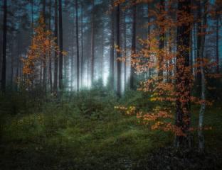 лес, природа, ели
