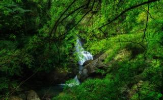 Taiwan, waterfall, Manyueyuan, waterfall, new, taipei, branches, rock, moss, nature