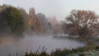 morning, fog, autumn
