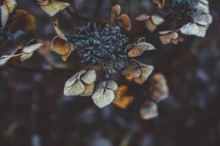 сухие, листья, клевера, мороз, макро