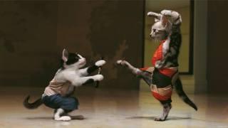 КОТЫ, драка, котэ-каратэ, забавные коты