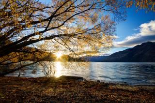 осень, солнце, лучи, пейзаж, горы, ветки, природа, дерево, утро, новая зеландия, озеро, Уакатипу