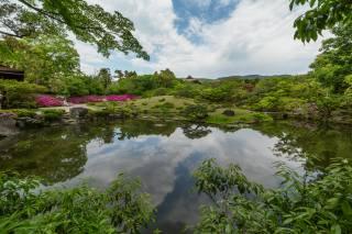 trees, landscape, nature, the city, the pond, Park, Japan, Нара, Александър Сандев