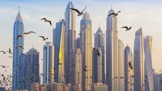 the city, building, skyscrapers, birds