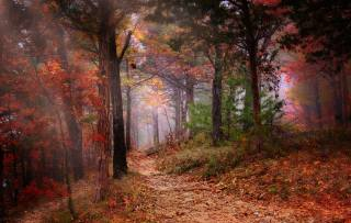 nature, landscape, forest, trees, path, autumn