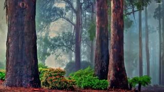 nature, forest, trees, trunks, The BUSHES, fog