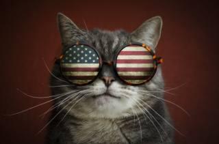 кот, очки, креатив
