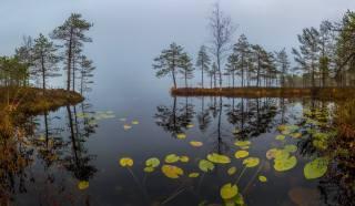 вода, деревья