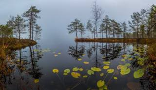 вода, дерева