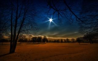 луна, снег, лес, деревья, зима, следы, ночь, небо