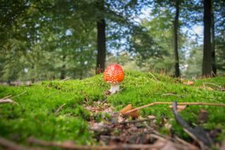гриб, природа, мухомор, размытый, фон, мох, природа