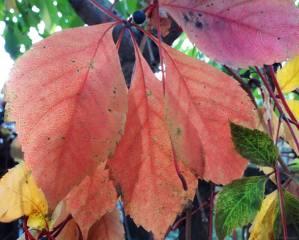 October, leaves, Golden autumn