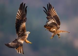 Животное, птица