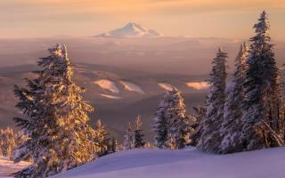 пейзаж, природа, лес, зима, снег
