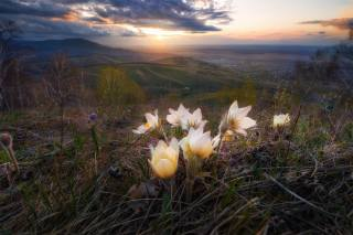Paul, Kalinenko, nature, landscape, Altai, mountains, spring, valley, Belokuriha, flowers, primroses, sleep-grass, sunset