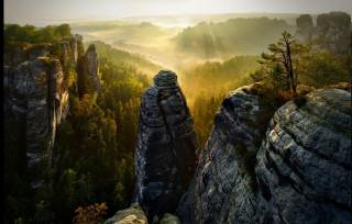 forest, cliff, fog, valley, trees, sunrise