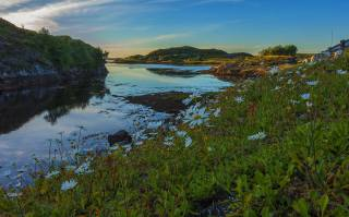 Norway, nature, landscape, river, the shore, hills, flowers, chamomile