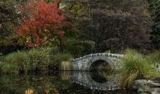park, stromy, listy, podzim, most