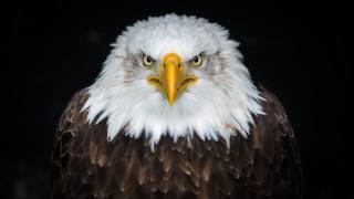 птицы мира, орел