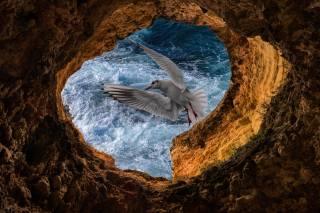чайка, скелі, хвилі