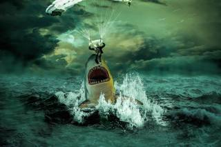 skydiver, shark, mouth, the ocean