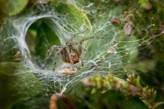 паук, паутина, листья, осень, макро