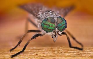 macro, eyes, insect, drops