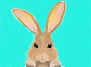 кролик, вуха, фон