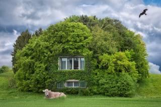 cottage, greens, cow, bird, photoshop