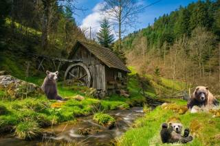 bears, mill, forest, photoshop