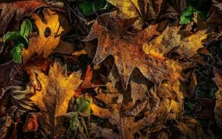 осінь, дуб, листя, іній, природа