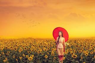 girl, Asian, field, sunflowers, birds, sunset