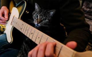 guitar, hands, animals
