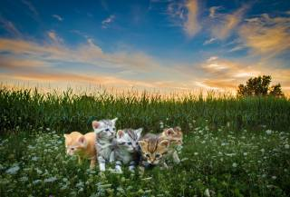 the sky, field, kittens, photoshop